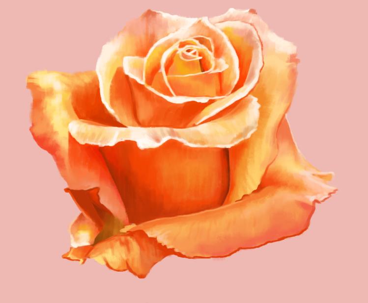 rose_study_2